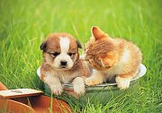 Chiots et chatons